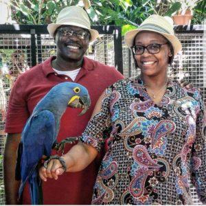 buy parrots in Denver - Steven Parrots