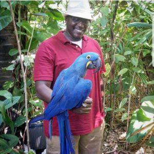 parrots for sale online - Steven Parrots
