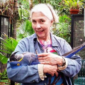 mature parrots for sale - Steven Paroots