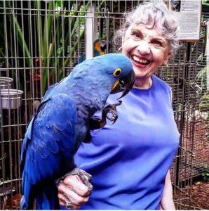 buy real parrot online - Steven Parrots
