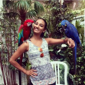 healthy hyacinth macaw for sale