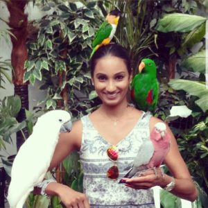parrot breeders in usa