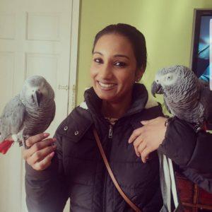 healthy hand raise parrots for sale