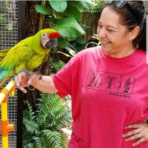 catalina parrots for sale